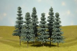 "3"" - 4"" Blue Spruce Trees"