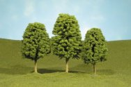"5.5"" - 6.5"" Deciduous Trees"