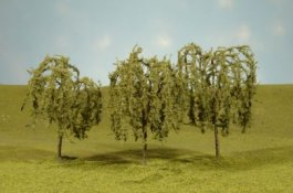 "3"" - 3.5"" Willow Trees"