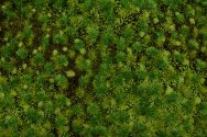 "Medium Green Tufted Grass Mat (one 11.75"" X 7.5"" sheet)"