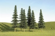 "3"" - 4"" Spruce Trees"