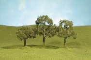 "5"" Walnut Trees"