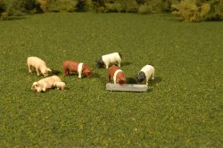 Pigs - O Scale