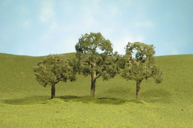 "2"" - 2.25"" Walnut Trees"